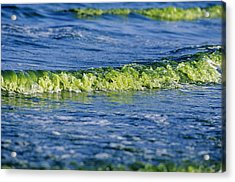 Algal Bloom Acrylic Print by Alexis Rosenfeld