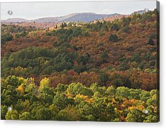Algonquin In Autumn Acrylic Print by Cale Best