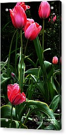 Acrylic Print featuring the digital art All About Tulips by Glenna McRae