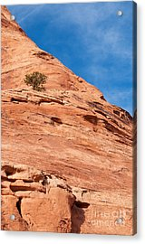 All Alone Acrylic Print by Bob and Nancy Kendrick