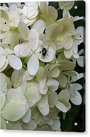 All Alone In The Limelight Acrylic Print by Nelson F Martinez