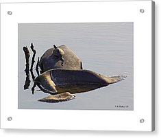 All By Myself Acrylic Print by Brian Wallace