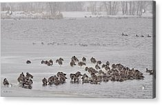 Acrylic Print featuring the photograph All Flights Delayed Due To Inclement Weather... by Kevin Munro