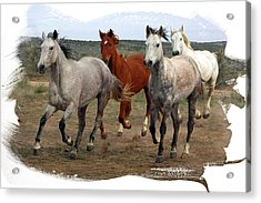 Acrylic Print featuring the photograph All Up In The Air by Judy Deist