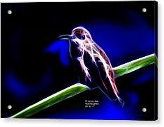 Allens Hummingbird - Fractal Acrylic Print by James Ahn