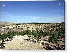 Almond Plantation Acrylic Print