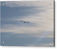 Almost Stealthily Acrylic Print by E Luiza Picciano