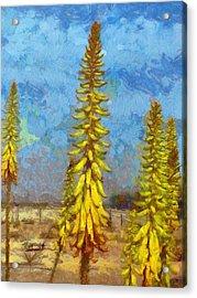 Aloe Vera Flowers Acrylic Print
