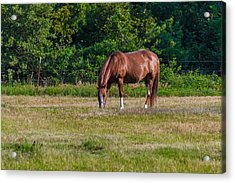 Alone In The Pasture Acrylic Print by Doug Long