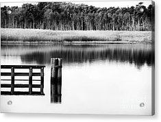 Alone In The Pine Barrens Acrylic Print by John Rizzuto