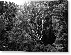Alone In The Woods Acrylic Print by Anne Boyes
