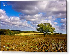 Alone On The Field  Acrylic Print by Radoslav Toth