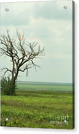 alone on the Prairie Acrylic Print