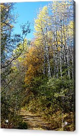 Acrylic Print featuring the photograph Along The Back Road by Vicki Pelham