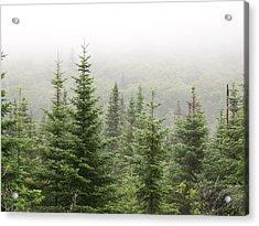 Acrylic Print featuring the photograph Alpine Trees by Robin Regan