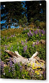 Acrylic Print featuring the photograph Alpine Wildflower Meadow by Karen Lee Ensley