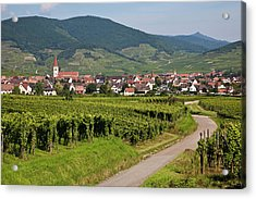 Alsace, France. Acrylic Print by Buena Vista Images