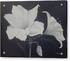 Amaryllis Acrylic Print by Virginia Butler