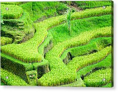 Acrylic Print featuring the photograph Amazing Rice Terrace Field by Luciano Mortula