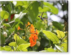 Amber Nectar Acrylic Print by David Grant
