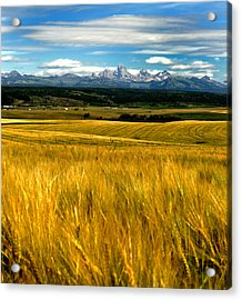 Amber Waves Acrylic Print by Rusty Enderle