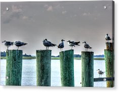 Amelia Island Locals Acrylic Print by Barry Jones