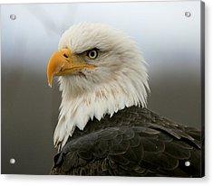 Acrylic Print featuring the photograph American Bald Eagle Portrait by Myrna Bradshaw
