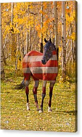 American Bred Acrylic Print by James BO  Insogna