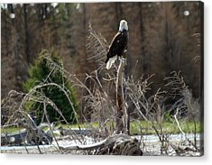 Acrylic Print featuring the photograph American Eagle On Snake River by Living Color Photography Lorraine Lynch