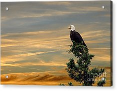 Acrylic Print featuring the photograph American Eagle Sunset by Dan Friend