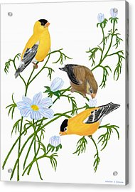 Acrylic Print featuring the digital art American Goldfinch by Walter Colvin
