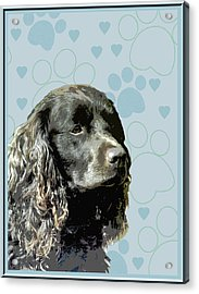 American Water Spaniel Acrylic Print by One Rude Dawg Orcutt