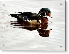 American Wood Duck Acrylic Print by Melodie Douglas
