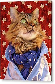 Acrylic Print featuring the photograph Americana Cat by Joann Biondi