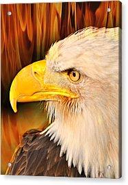 Americasn Bald Eagle Acrylic Print by Marty Koch