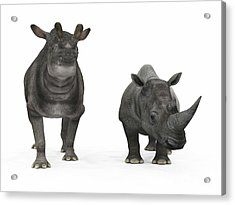 An Adult Brontotherium Compared Acrylic Print