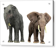 An Adult Deinotherium Compared Acrylic Print