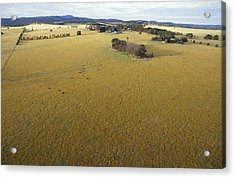 An Aerial View Of Farmland Acrylic Print by Jason Edwards