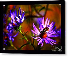An Afternoon Bee In The Asters Acrylic Print by Susanne Still