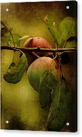 Acrylic Print featuring the photograph An Apple A Day by Kathleen Holley