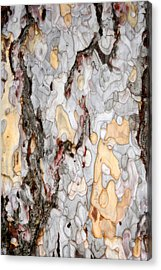 An Bark Of Old Pine Acrylic Print