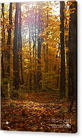 An Inspired Stroll Through The Forest Acrylic Print by Inspired Nature Photography Fine Art Photography