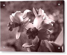 Acrylic Print featuring the photograph An Orchid Dream by Kerri Ligatich