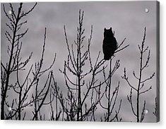 An Owl Silhouette Acrylic Print