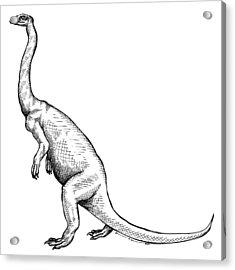 Anchisaurus - Dinosaur Acrylic Print by Karl Addison