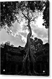 Ancient Tree Acrylic Print by Arj Munoz