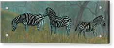 And Baby Makes Three Acrylic Print by Linda Harrison-parsons