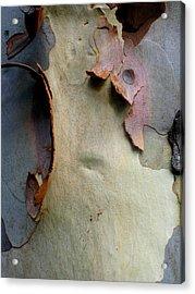 And God Made Trees Acrylic Print