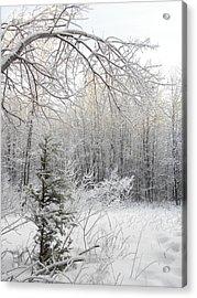 And More Snow Acrylic Print