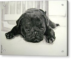 Andy's Puppy Acrylic Print